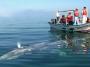 Ballenas en Baja California Sur