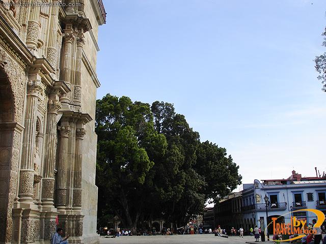 Alameda de León