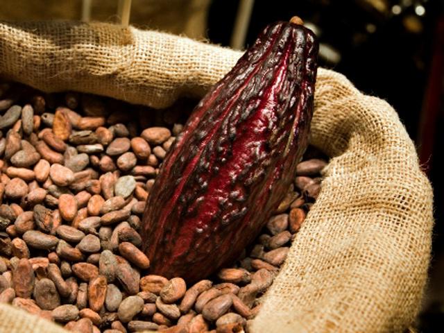 El cacao, un tesoro del nuevo mundo