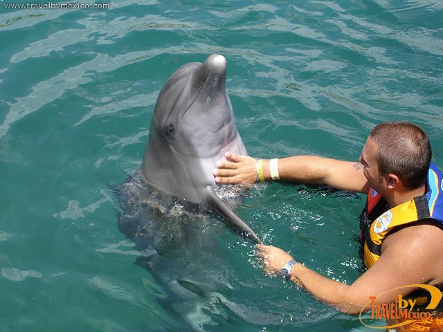 México, un destino perfecto para nadar con delfines