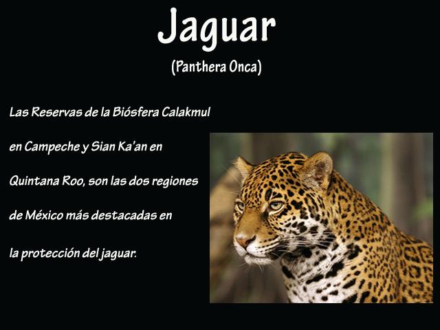 México, un país que lucha por preservar su biodiversidad