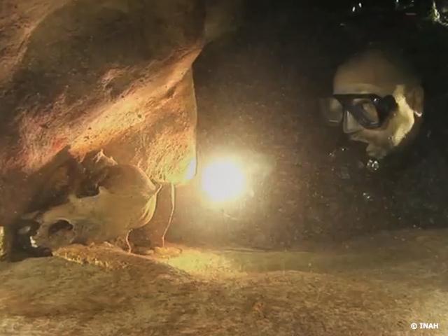 Filman en un cenote una especie de oso extinta hace más de 12,000 años