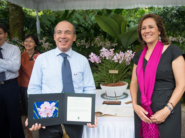 Ascocenda Calderón Zavala, orquídea VIP hecha en Singapur