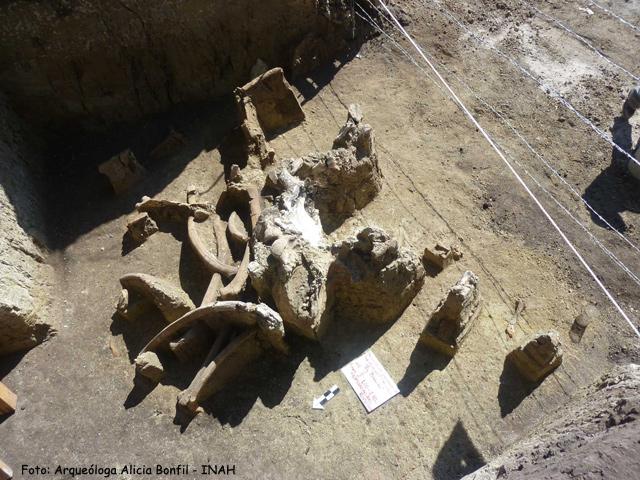 Hallan restos óseos de la Edad del Hielo