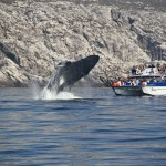 Avistamiento de Ballenas Jorobadas desde las Islas Marietas