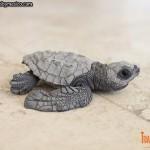 Tortuga Golfina recién nacia