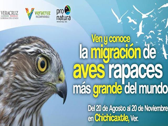 Veracruz: lugar de la migración de aves rapaces más grande del mundo