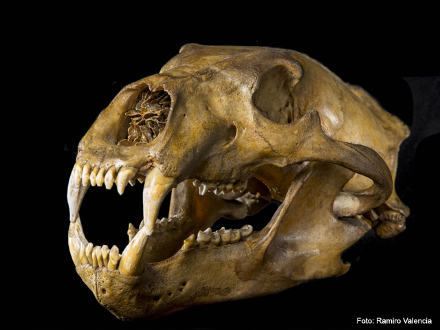 Museo Regional de Querétaro exhibirá el patrimonio paleontológico de México