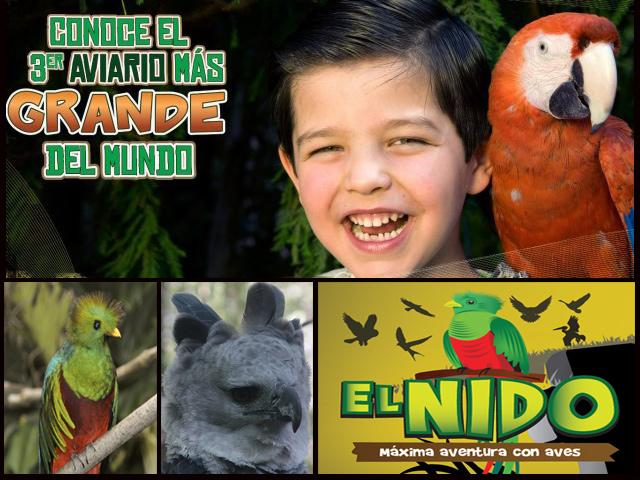 El Nido, uno de los aviarios más grandes del mundo está en México