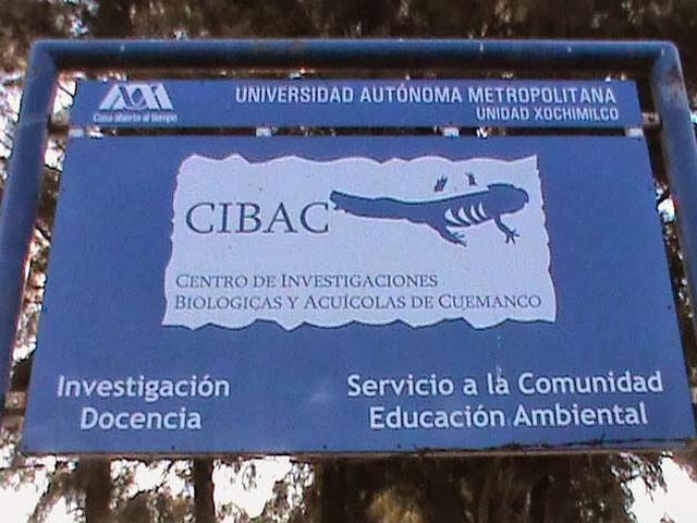 CIBAC: 20 años preservando al Ajolote Mexicano en Xochimilco
