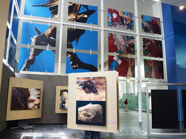 """""""Águila real, símbolo vivo de México"""", exposición fotográfica en el AICM"""