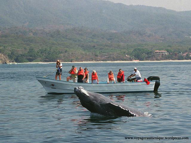 Ecoturismo, turismo de aventura y turismo comunitario en México
