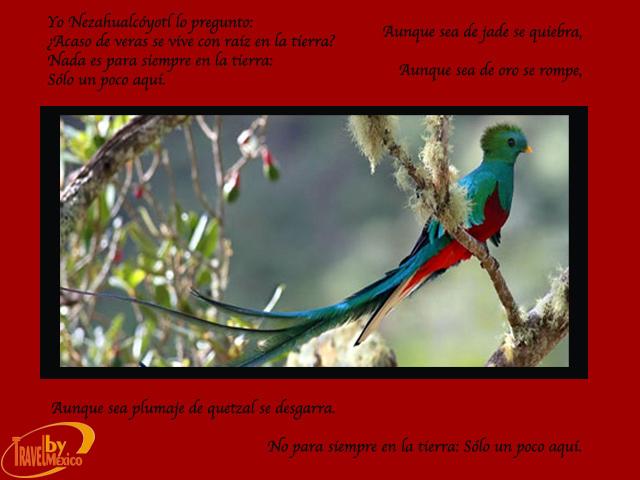 El Quetzal: ave en peligro de extinción