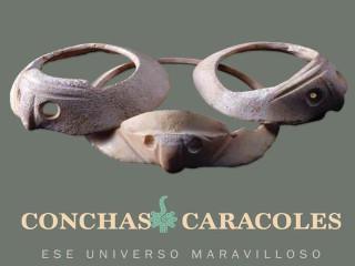 Conchas Caracoles. Ese universo maravilloso, en el Museo del Palacio Postal, México