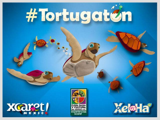 Participa en el Tortugatón y ayuda a salvar tortugas marinas en México