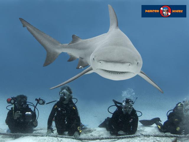 Inicia el año con adrenalina buceando con el tiburón toro en Playa del Carmen