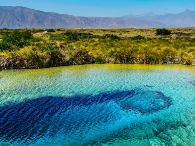 Los manantiales y la biodiversidad endémica de Cuatrociénegas