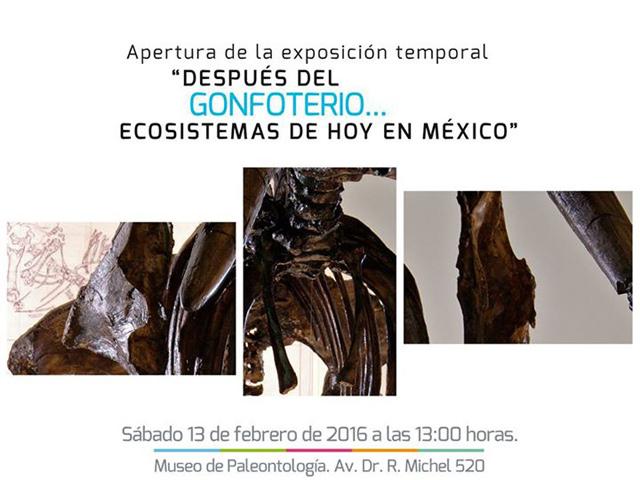 Más de 9,500 fósiles exhibe el Museo de Paleontología de Guadalajara