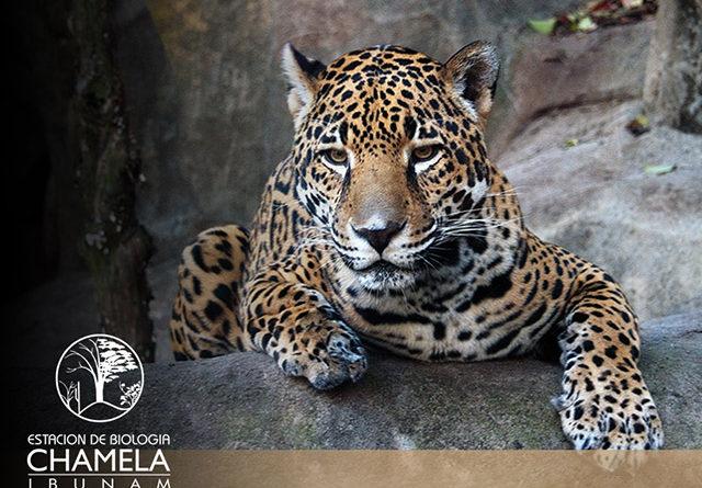 Reserva de la Biosfera Chamela-Cuixmala