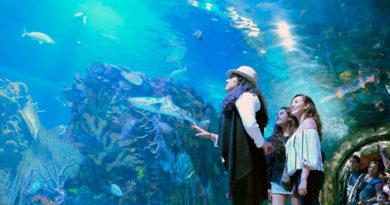 México cuenta con zoológicos y acuarios que no te debes perder.