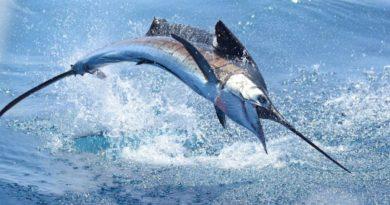 Vive los torneos de Pesca en Puerto Vallarta, Jalisco, y enamórate de este destino.