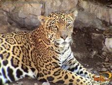 Miguel Alvarez del Toro Regional Zoo