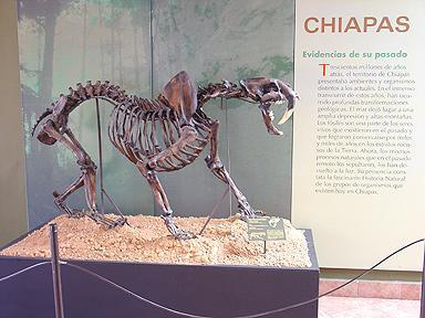 Museum Of Paleontology Eliseo Palacios Aguilera Tuxtla