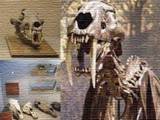 Musée de Paléontologie de Guadalajara
