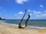 Tree trunk stucked in the middle of San Pancho Beach