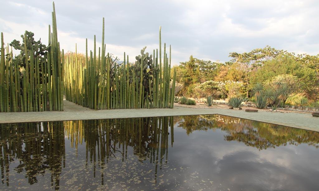 Jardin etnobot nico de oaxaca oaxaca for Jardin oaxaca