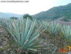 The Craftsmanship of Mezcal