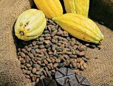 Ruta del Cacao